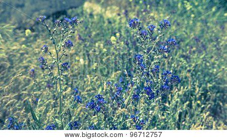 blue wild flowers scene