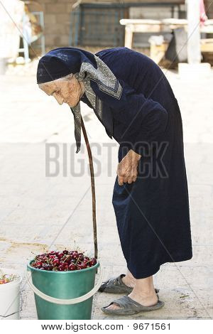 Senior Woman And Bucket Of Cherry