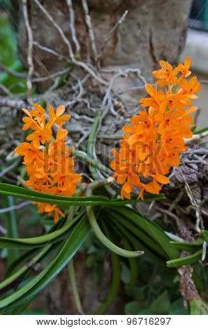Orchids Have Small Flower Orange.