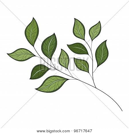 Vector Beautiful Colored Contour Leaf