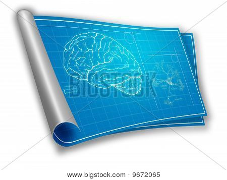Blueprint of an brain