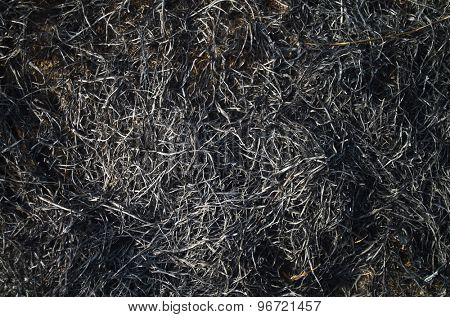 Burned grass on a field