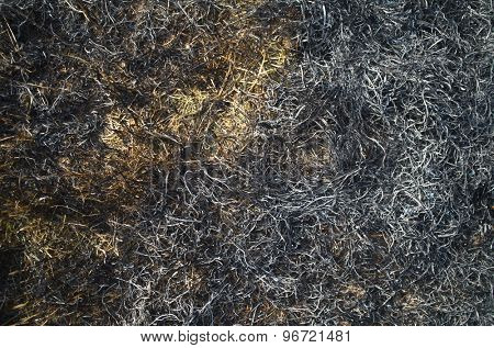 Ash from burned grass