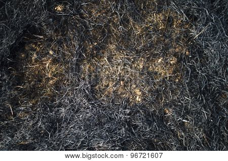 Burned straws and grass on a field