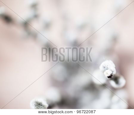 Beautiful spring flowers background. Nature bokeh. Banner large.