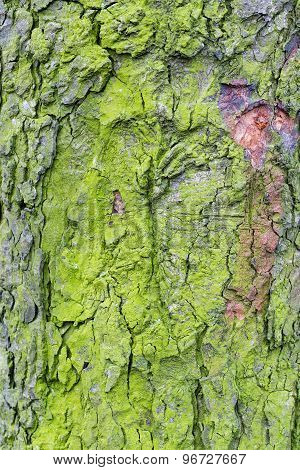 Wood textured with green moss