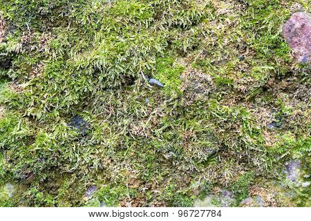 seamless stone wall texture with moss