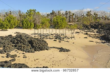 Unusual Vegetation On A Tropical Beach