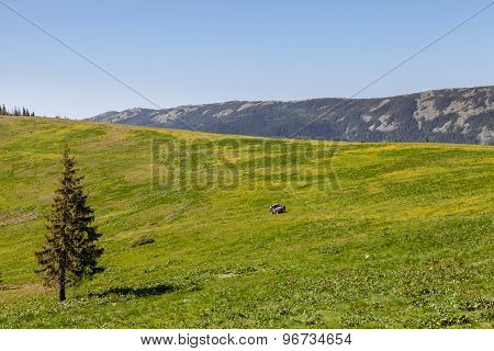 Mountain Landscape With Green Pasture And Pine Tree