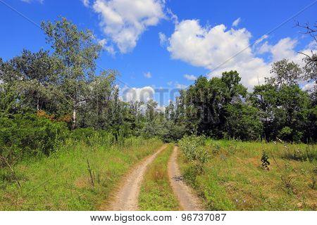 rut road on summer meadow