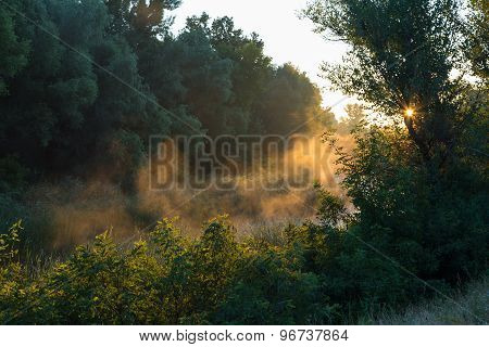 Misty, Sunny Morning In Deciduous Forest.