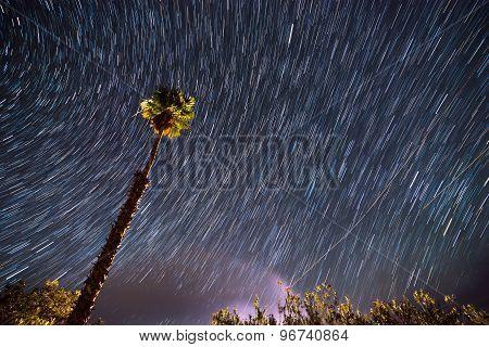 Single Palm Tree Agains Star-trail Sky