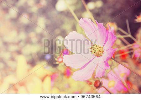 Pink Flower Taken Closeup.toned Image.