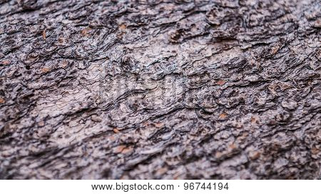 Tree Bark Texture Background Pattern Close-up