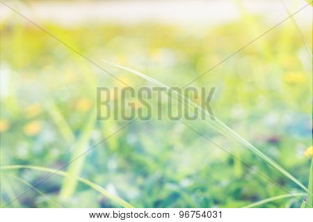 Grass With Defocused Background Vintage Style