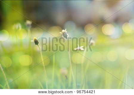 Small flower closeup photo in vintage style