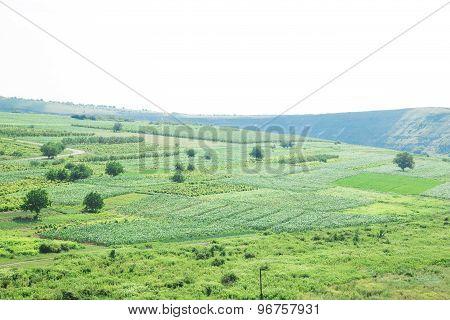 Summer field landscape