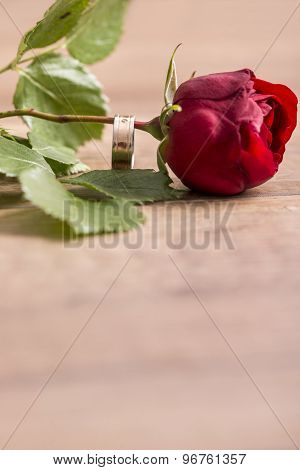 Romantic Engagement Ring  On A Stem Of Single Fresh Red Rose Symbolic Of Love And Engagement Proposa
