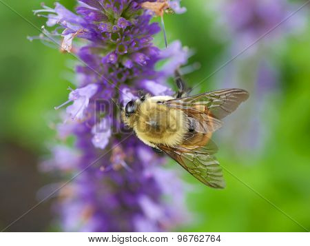 Bee Flying Near a Flower