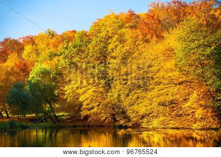 Water With Autumn Trees In Park