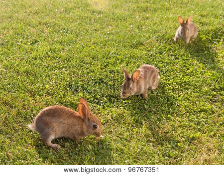 Little Rabbits On The Grass