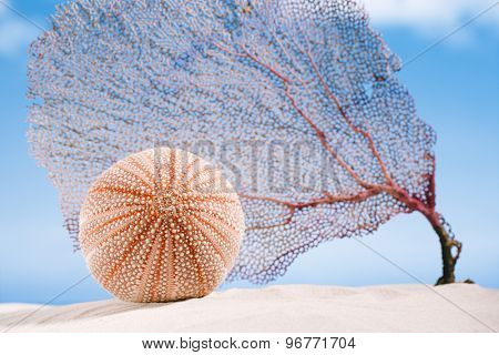 sea urchin sea urchin  and coral  - nice and colorful  on white sand beach, ocean,  sky and seascape