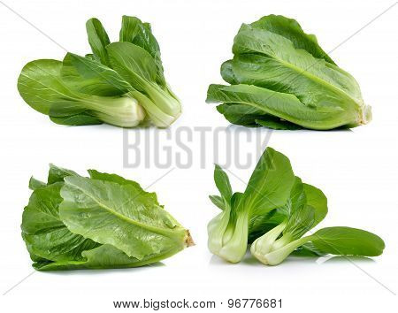 Bok Choy Vegetable And Cos Lettuce On White Background