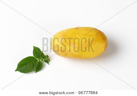 single baby potato with leaves on white background