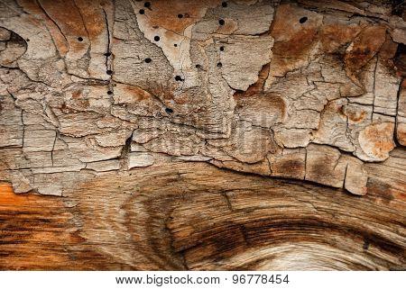 Abstract natural wood texture