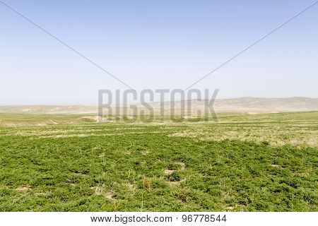 Green Spring Steppe