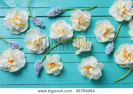 White Narcissus  And Blue Muscaries Flowers