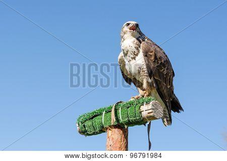 Eagle On The Blue Sky