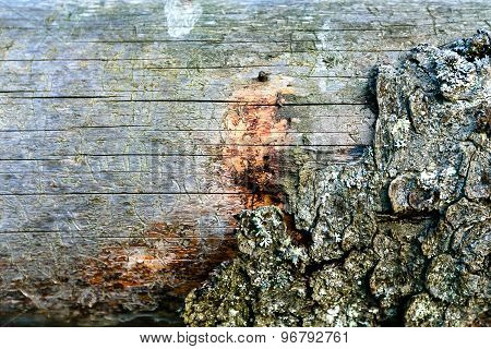 Background Structure Of Wood And  Bark Close-up. Shallow Depth Of Field
