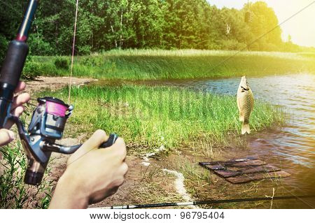 Fish Caught On A Hook On The Background Of The Lake