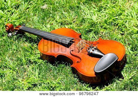 A Violin Lying On A Green Grass