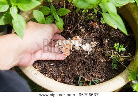 Hand releasing crushed egg shell onto soil as natural fertilizer