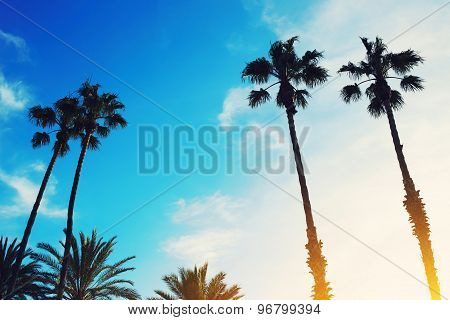 Excellent shot of silhouetted lush palm trees against dusky bright sky at sunset