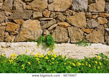 Clearing With Wild Flowers Near The Wall Of Rough Stone. Background...