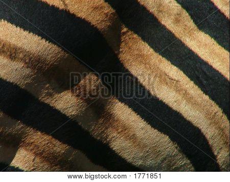 Zebra Skin Closeup