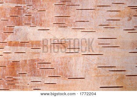 Birch Bark4