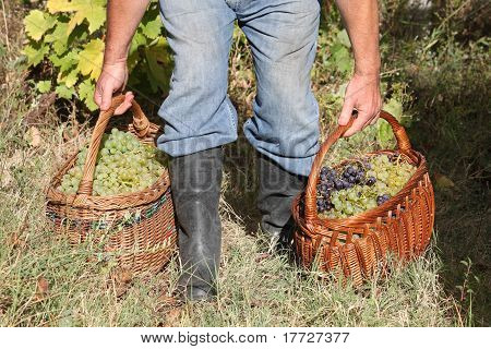 Man holding grapes in woven basket