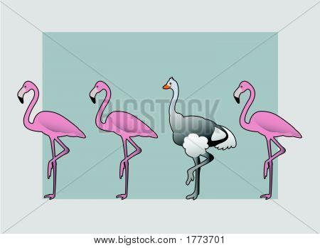 Strauß-Flamingo