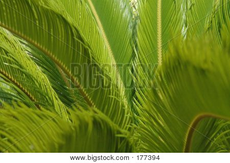 Green Fern Background - Horizontal