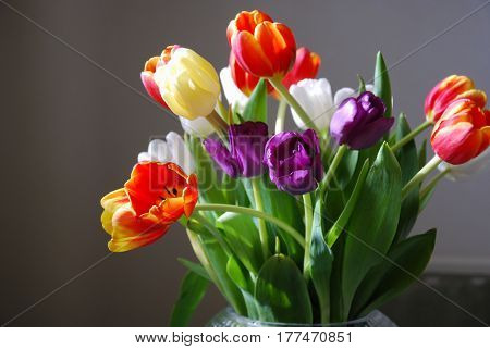 Lovely colorful tulips bouquet with natural light