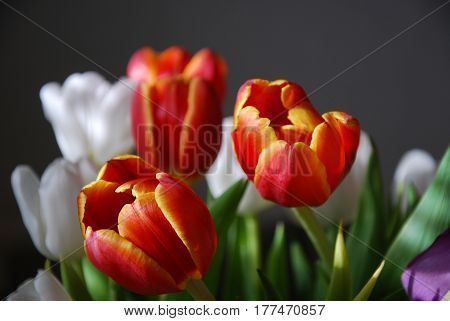 Lovely glowing tulips closeup in natural light