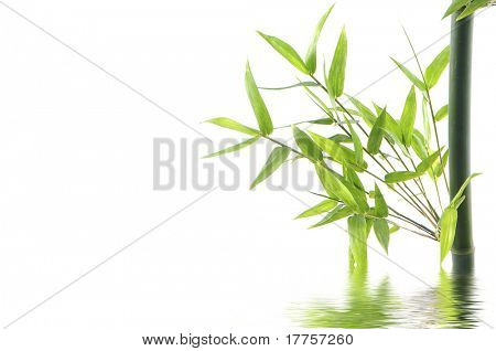 Bamboo branches with leave reflected in water