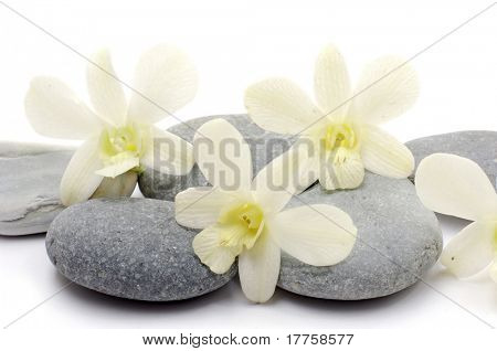 Zen stones with white orchid isolated on white