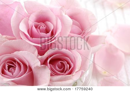 Petals and pink rose valentines
