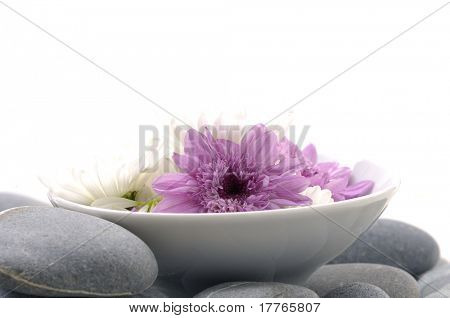 Bowl of gerber daisy on zen stones