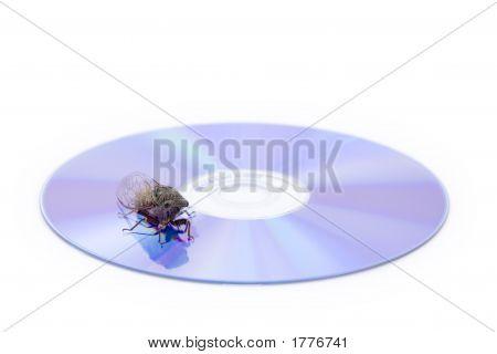 Cicada On Cd